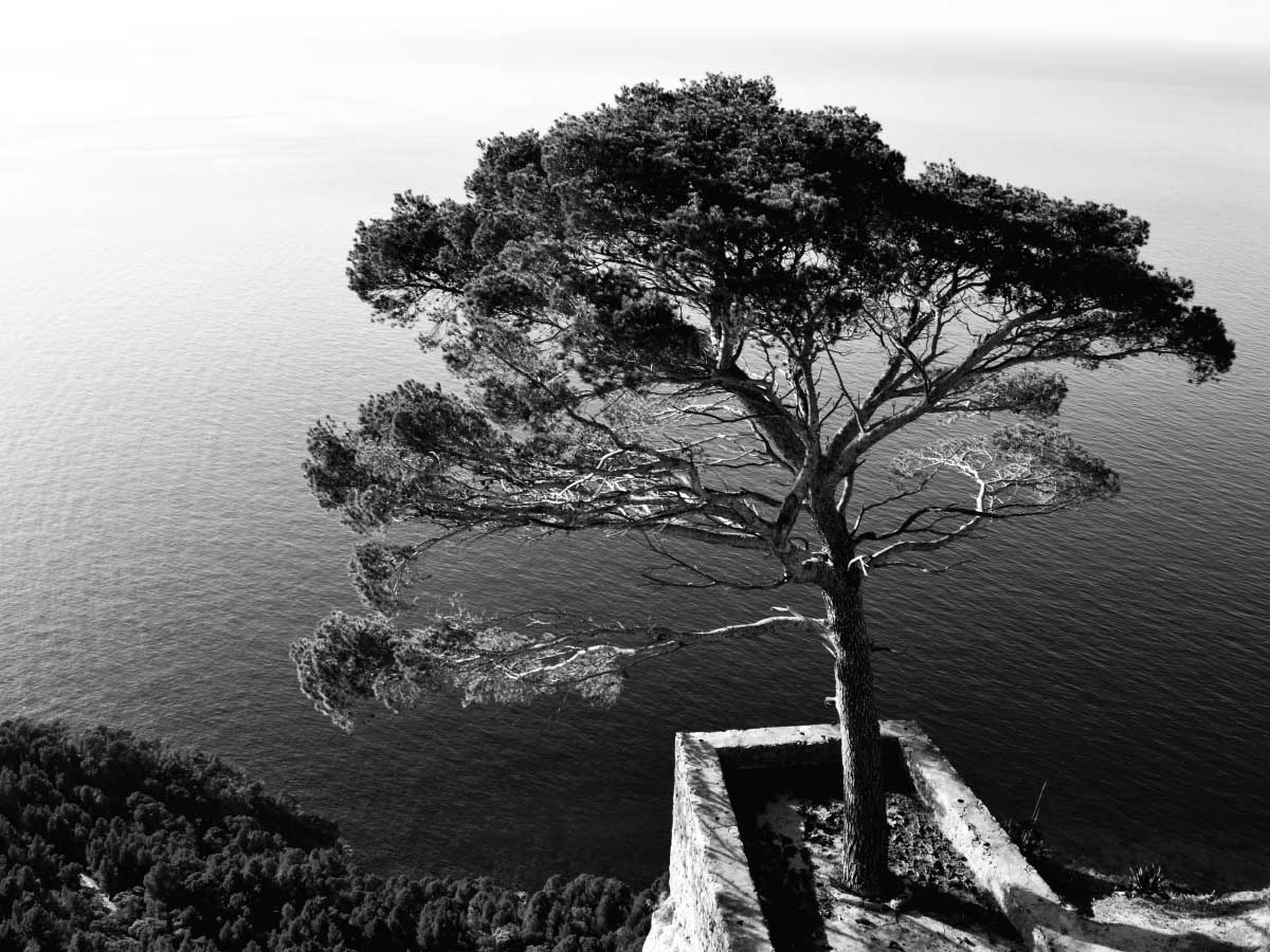 Lonely Pine Tree Cala Deia