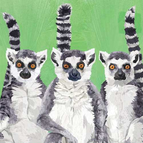 Lemur Amigos 33