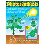 T 38192 PHOTOSYNTHESIS CHART