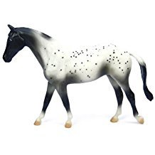 BLACK SEMI-LEOPARD APPALOOSA
