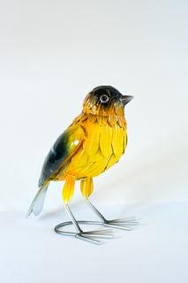 Yellow finch bird