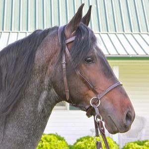 Nurtural Horse Impressive Bitless Bridle