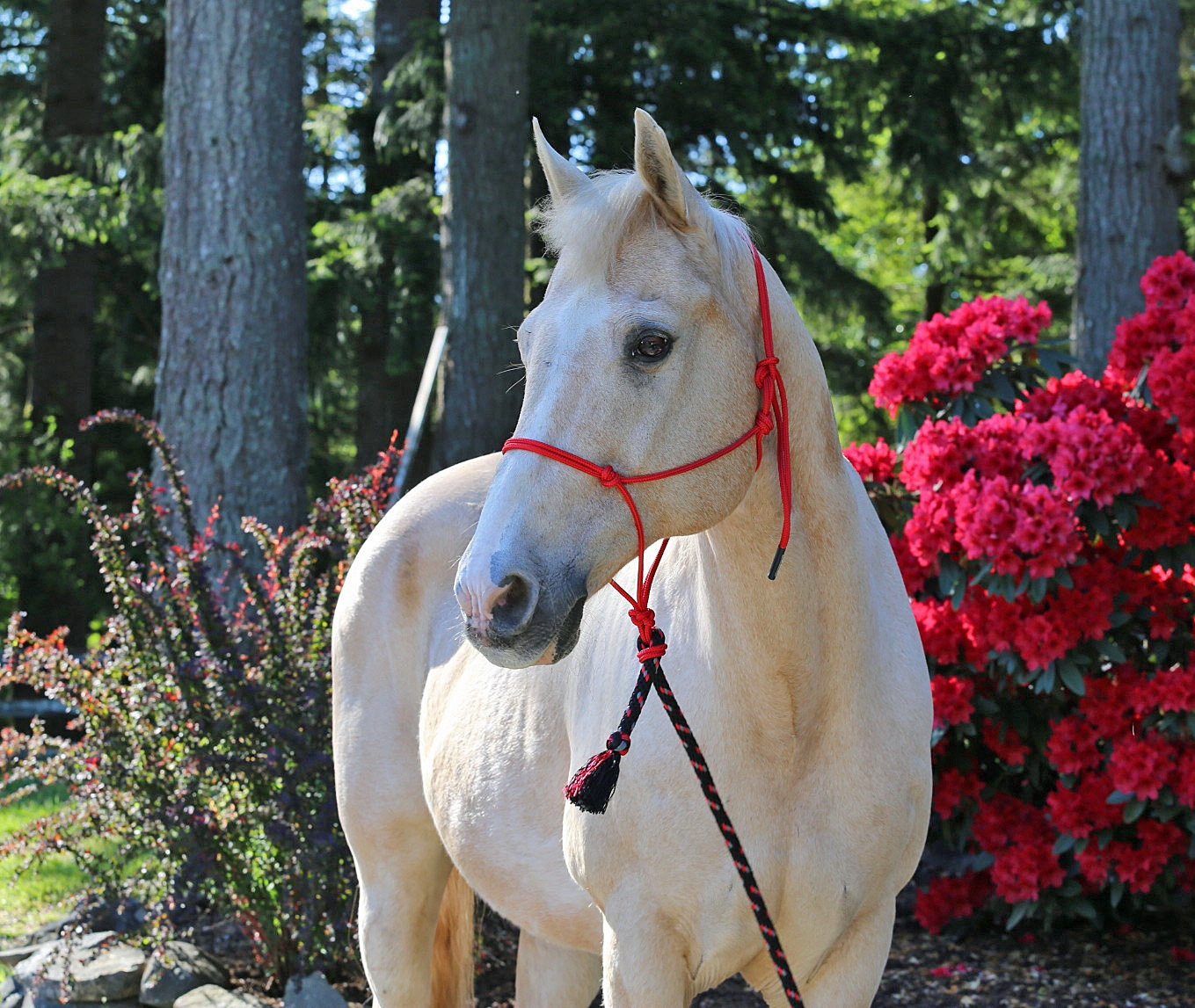 Burwash Natural Horse Rope Halter