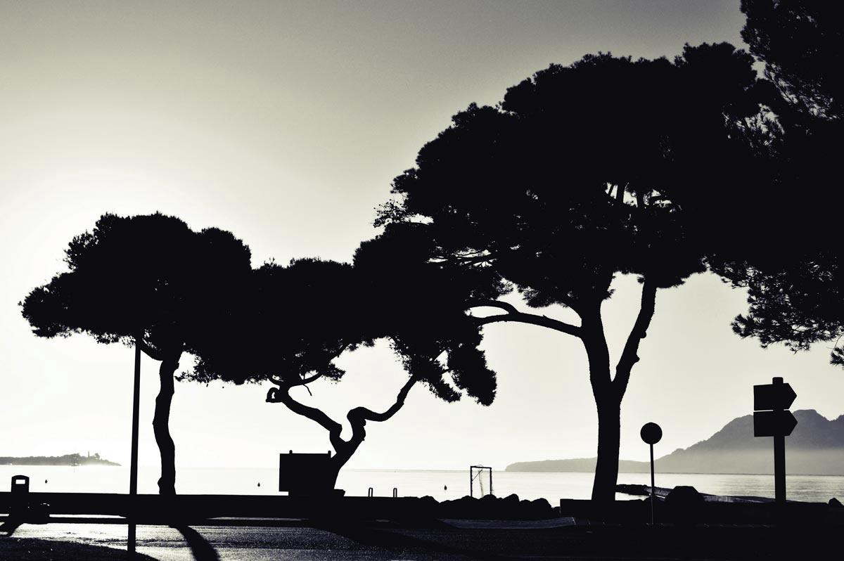 Llenaire Trees