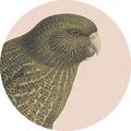 Coaster- Kakapo Blush