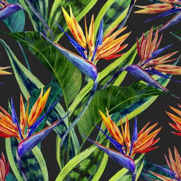 Bird of paradise colourful canvas print