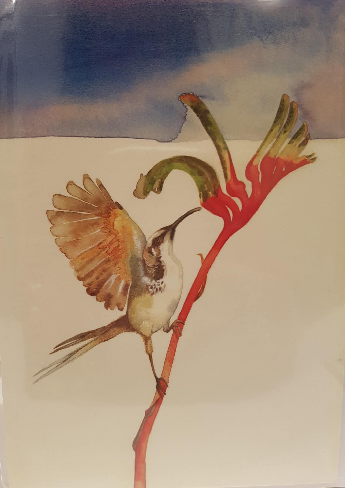 Greeting Card - Honeyeater and Kangaroo Paw