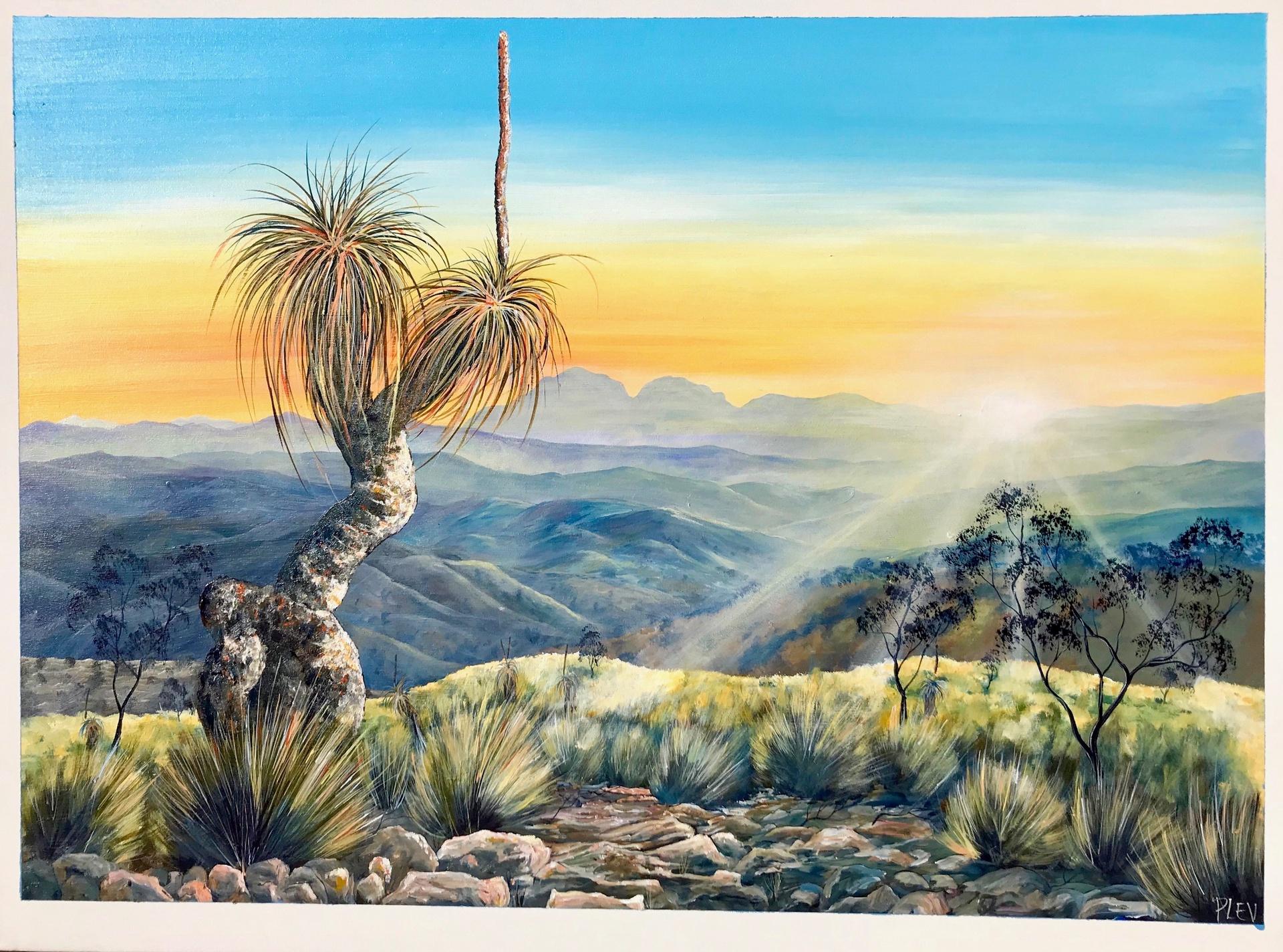 Flinders Sunrise