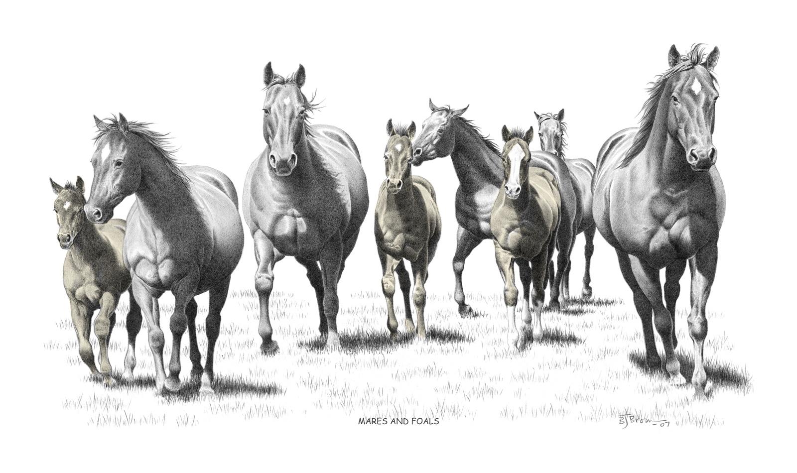 u0026quot mares and foals u0026quot