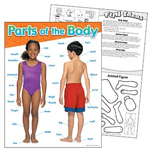 T 38048 PARTS OF THE BODY CHART