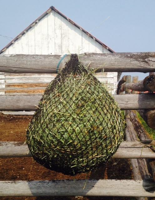 Purely Ponies Mini Net