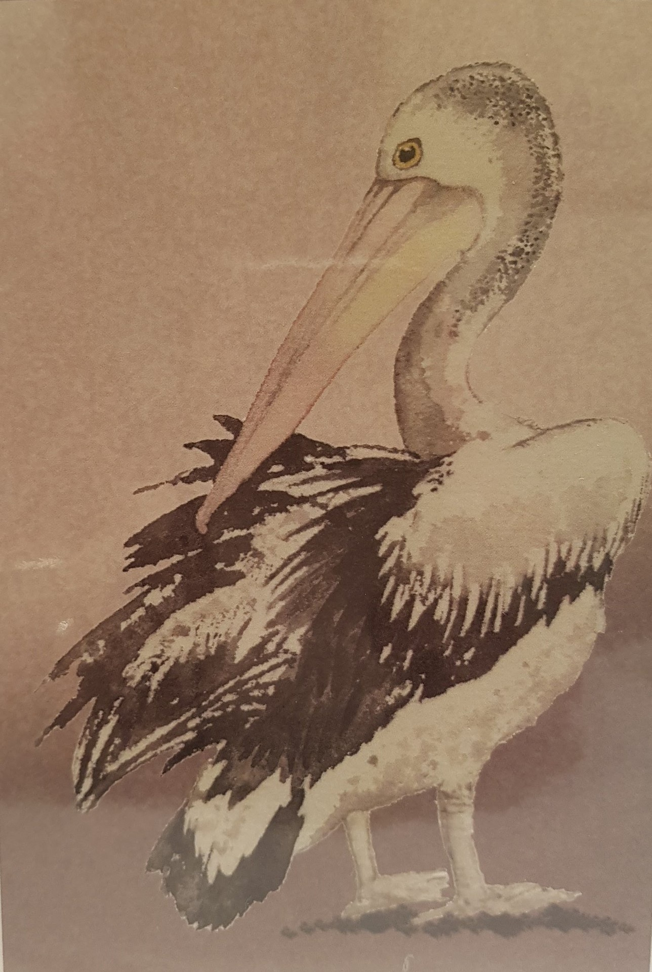 Greeting Card - Pelican