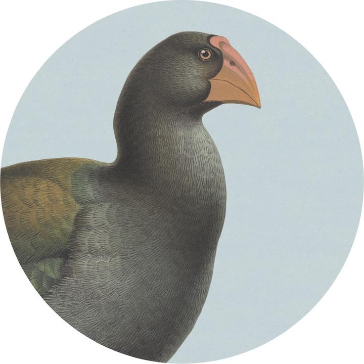 Coaster - Takahe Blue