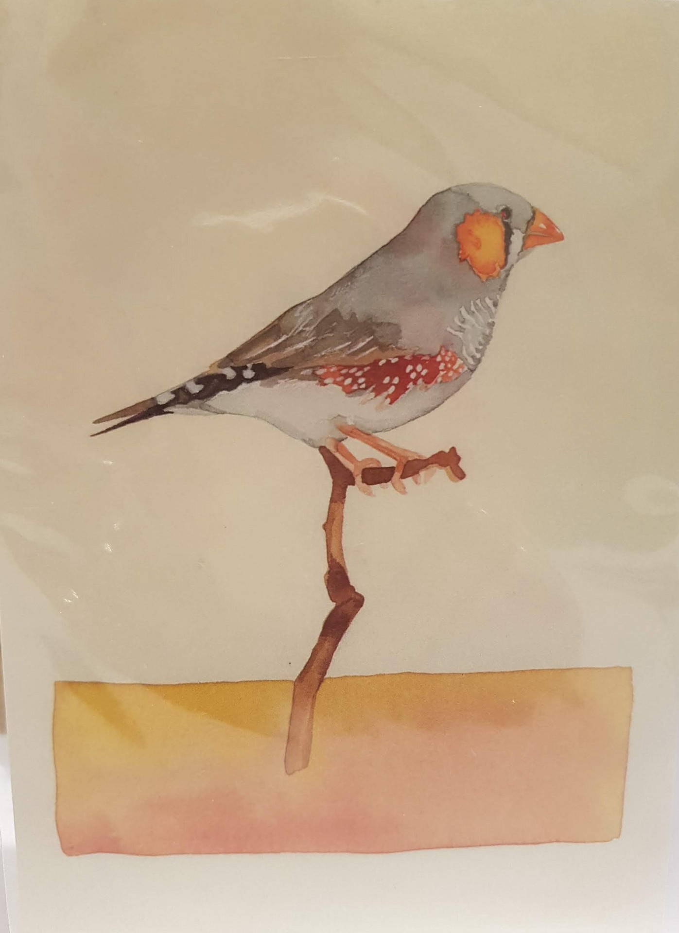 Greeting Card - Zebra Finch