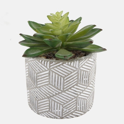 Succulent in Textured Cement Pot