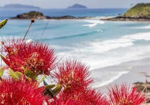Greeting Card Ocean Beach Pohutukawas
