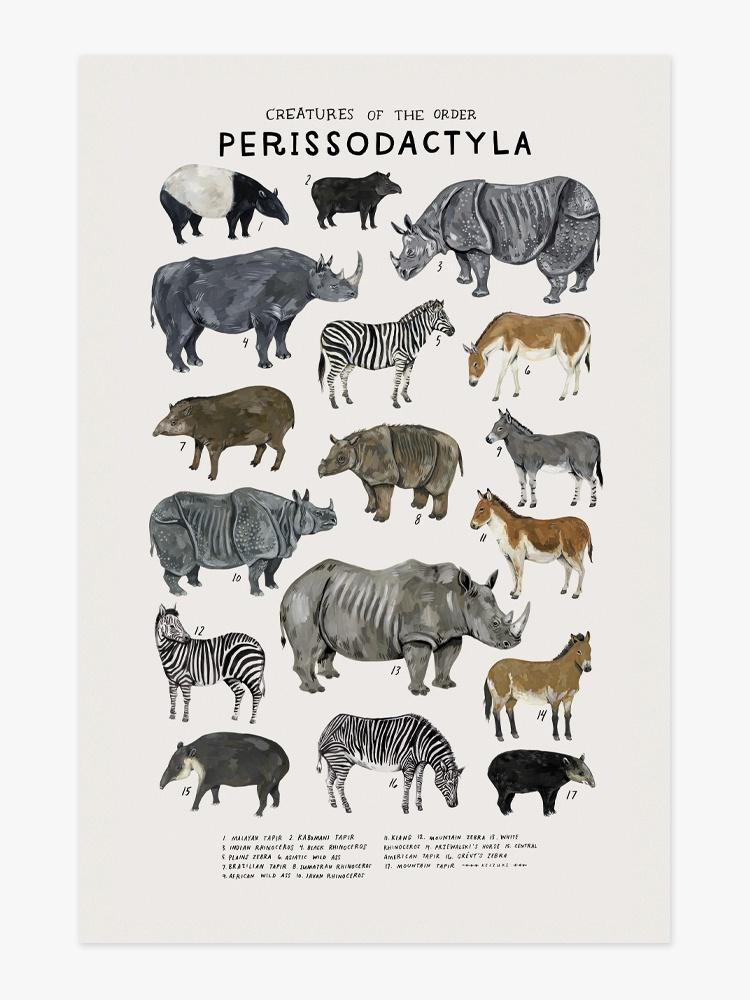 KELZUKI - PERISSODACTYLA