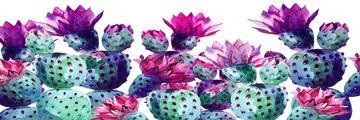 Canvas print Cactus long garden 150x50cm