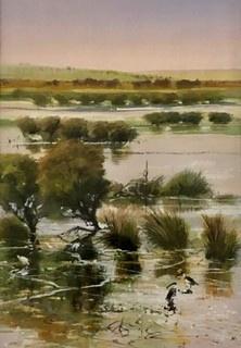 Wetland Study with ibis