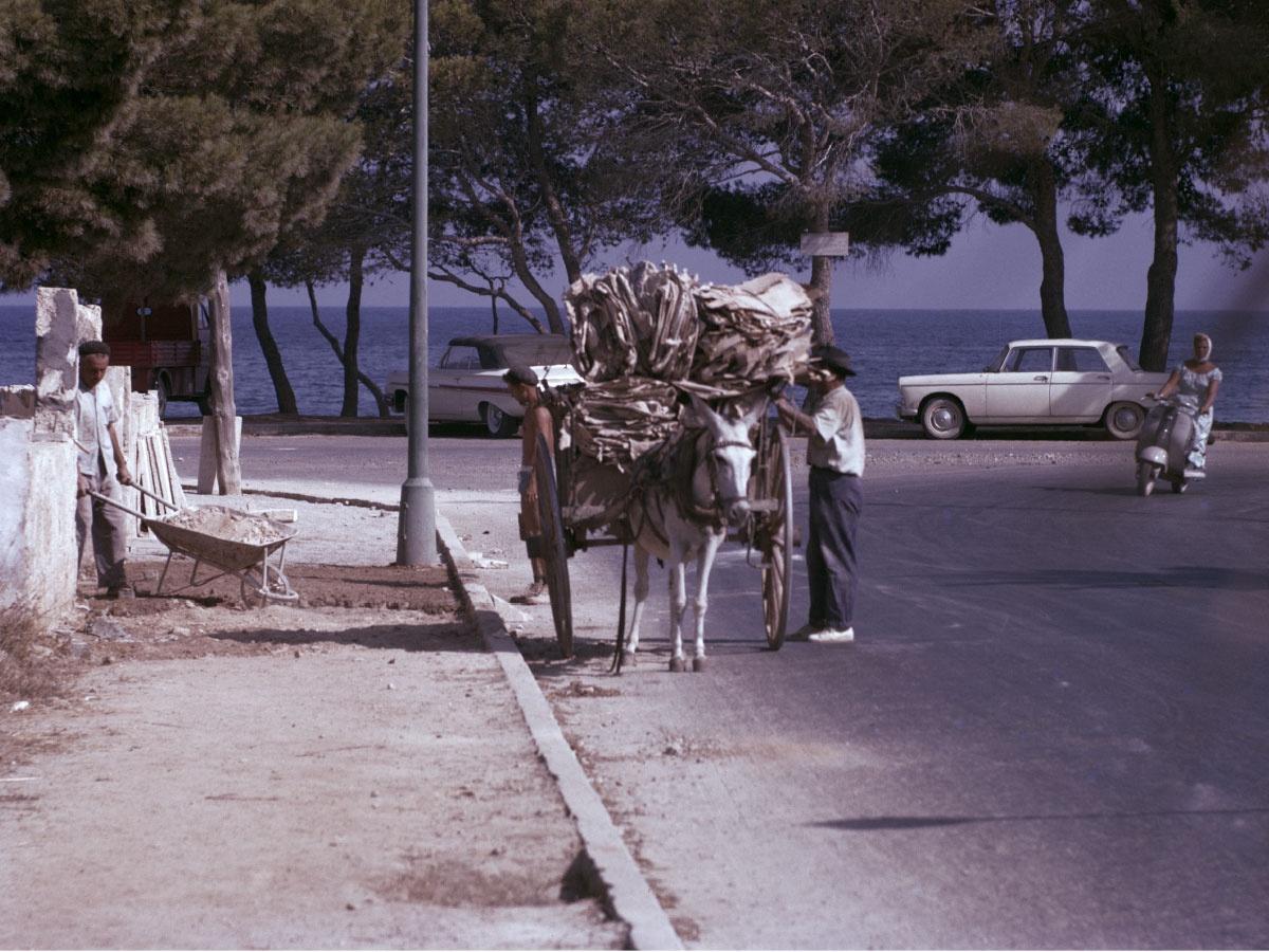 Old Palmanova Horses