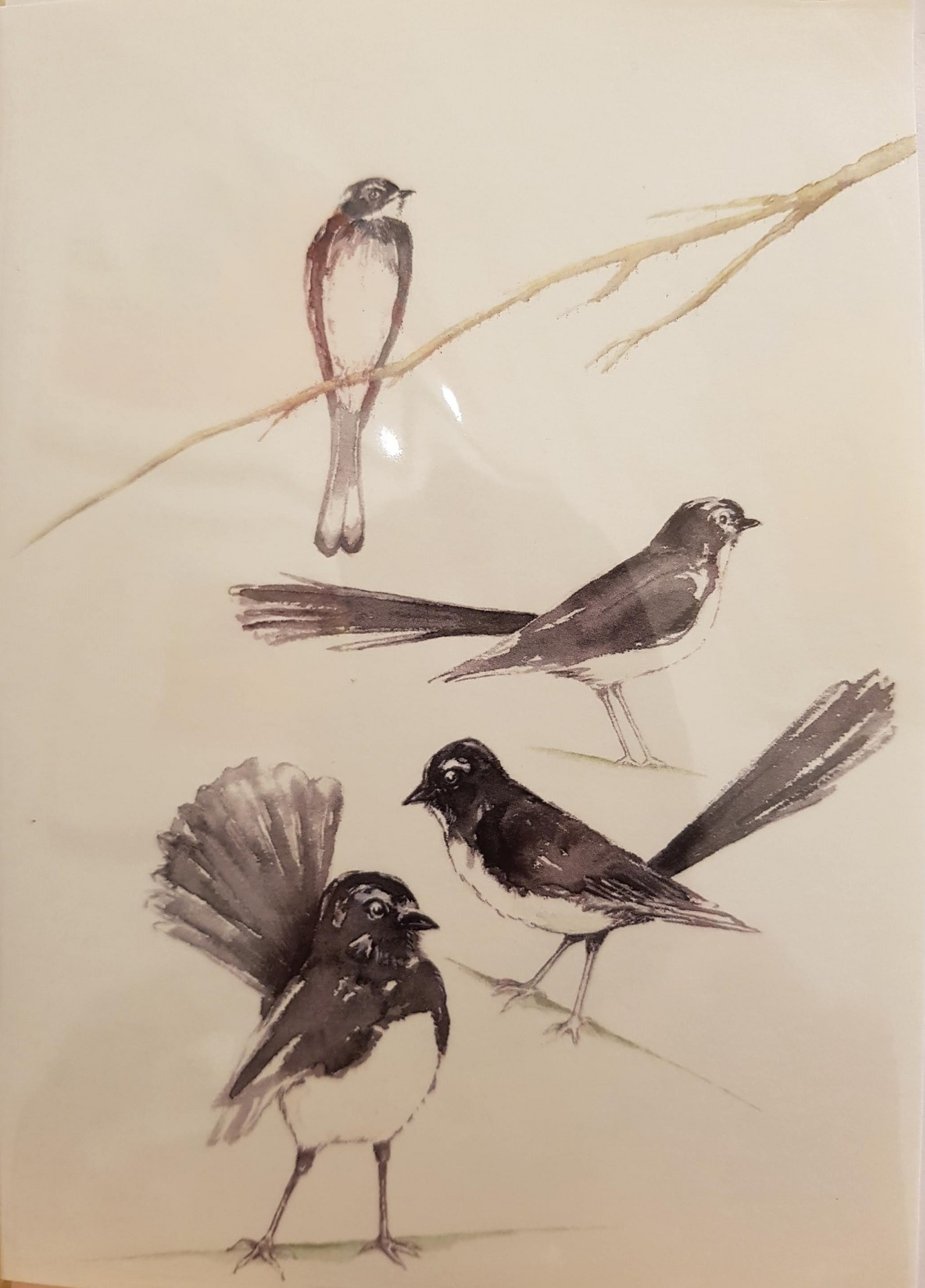 Greeting Card - Willie Wagtails