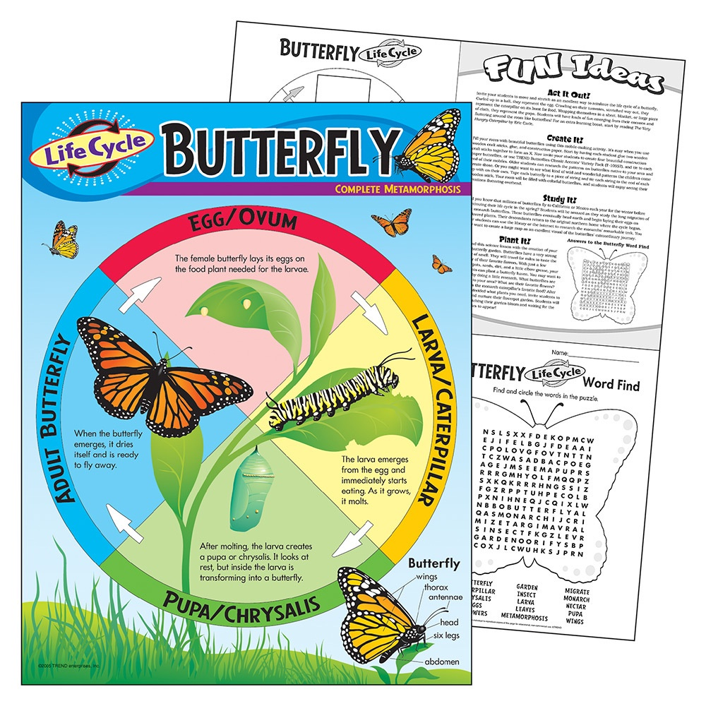 X T 38151 LIFE CYCLE OF A BUTTERFLY CHART