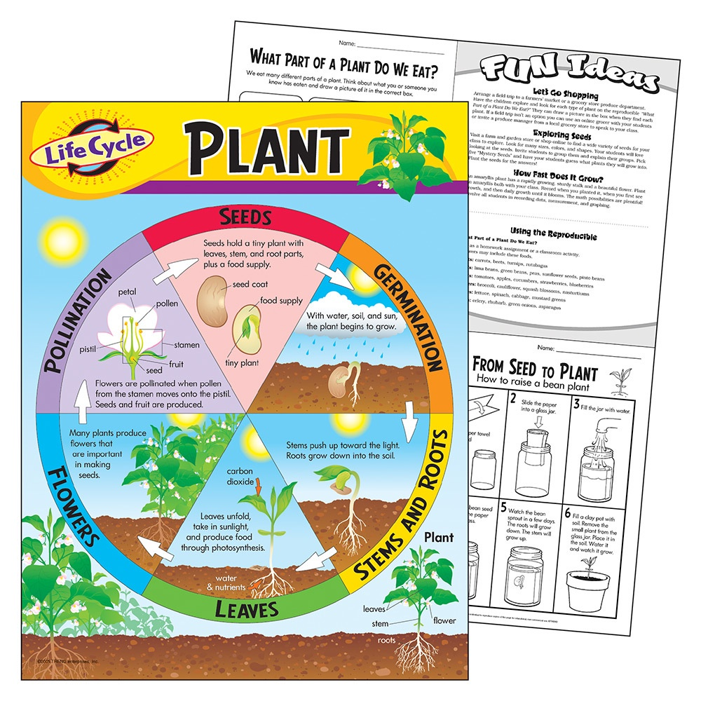 T 38179 LIFE CYCLE OF A PLANT CHART