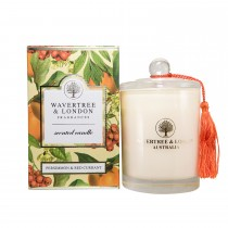W & L Persimmon Candle