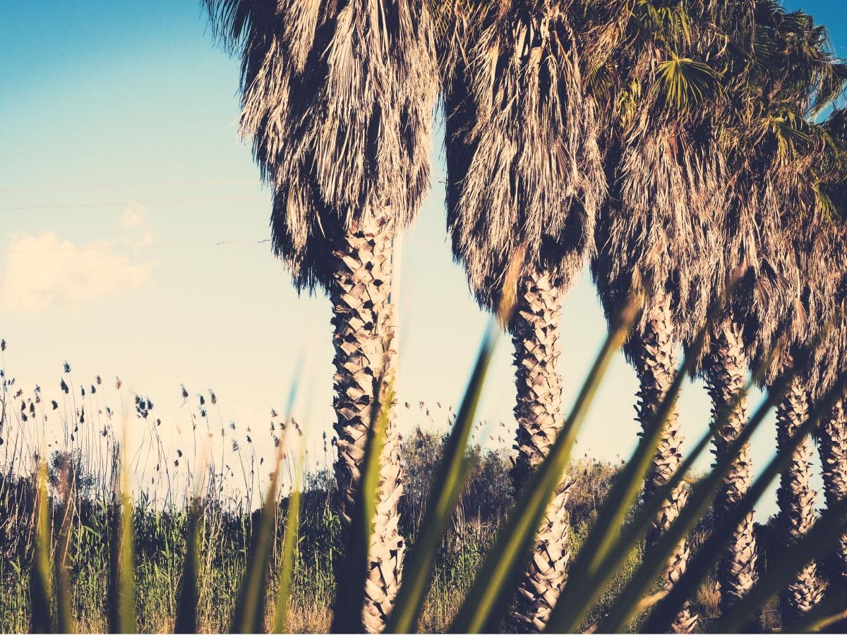 Palm Trees Mallorca